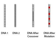 NewDNA